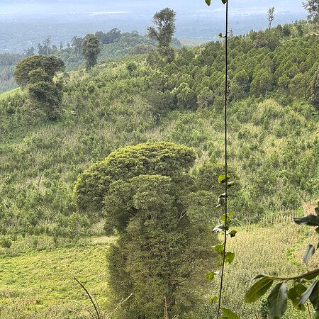 Just under Mt Meru, there is this 2400 ASL mountain with no name but worth a climb, be careful of the black snakes. Some Columbus monkeys were spotted, this mountain which is a twin mountain has some amazing wild life sound believe me real wild life sound.