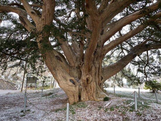 Large Kaya of Manshoji