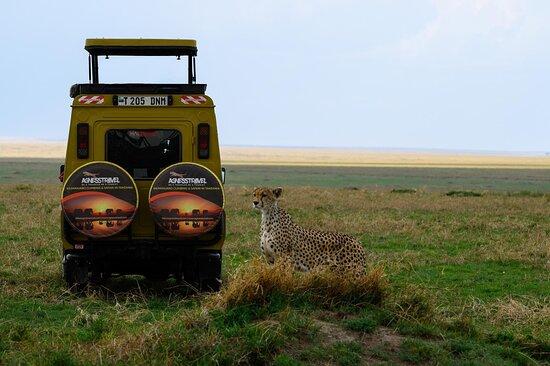 Our luxury safari vehicle posing for the cheetah