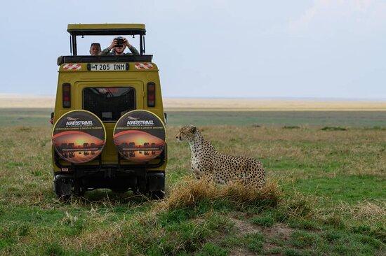 Serengeti national park plain