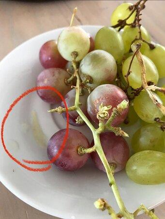 Uva con cebolla en el desayuno