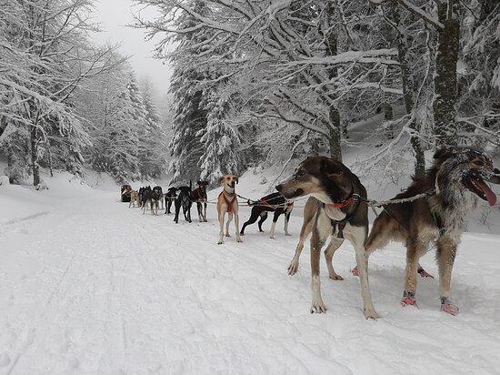 Alaskan Vercors Aventure