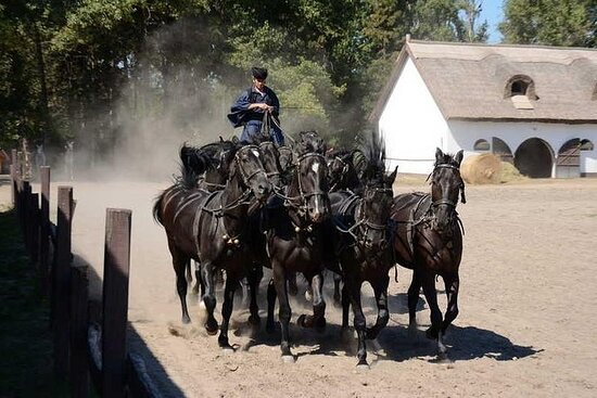Horseshow on the Hungarian Puszta, private tour from Budapest with...