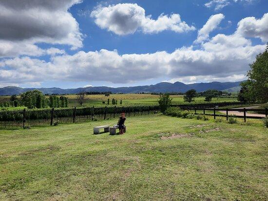 Wine Tour Privado - Calamuchita: Viñedo de Finca Vista Grande