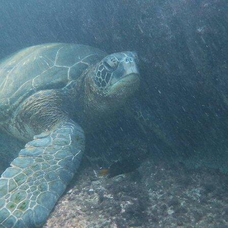 Super close to sea turtle