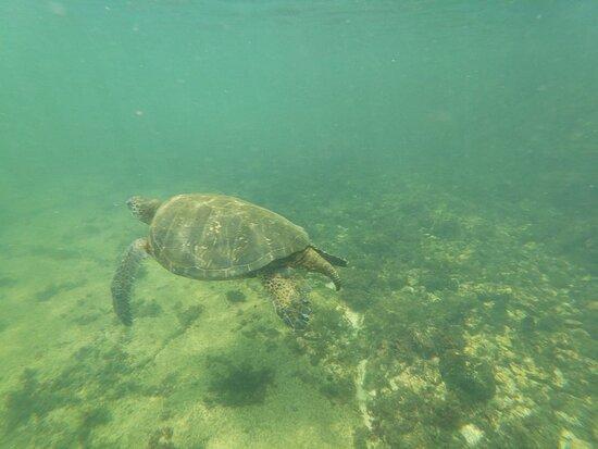 More Turtles