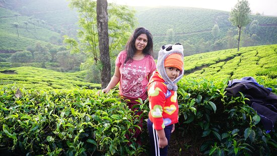 Devikulam, India: Tea side morning walk @ bottlebrush