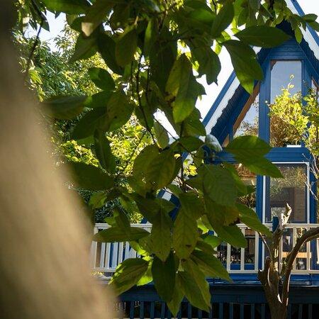 Mugla, Turkey: Cozy bungalow in orange garden for rent