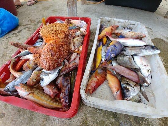 Sali, Croatia: Fishing on Dugi otok