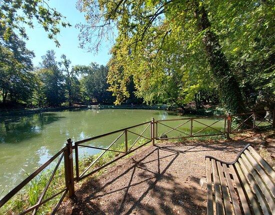 Laghetto Dei Cigni Nel Parco Di Monza
