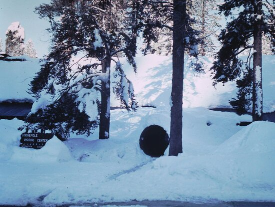 Sequoia and Kings Canyon National Park, CA: lodgepole winter