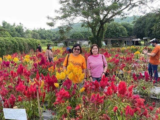 Sunflora Farm