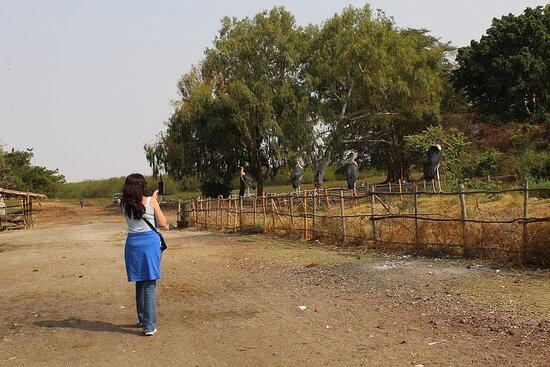 Taking photos for Marabou Storks at Lake Ziway (South of Addis Ababa)