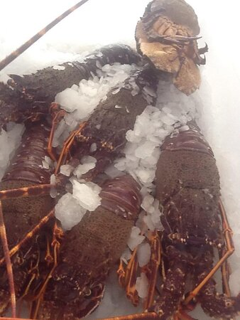 Lobster from the Ionian Sea