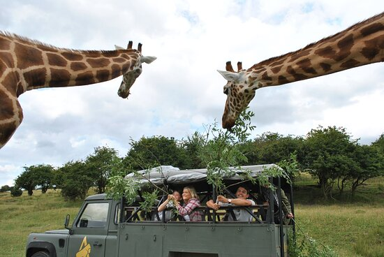 Port Lympne Safari Reserve