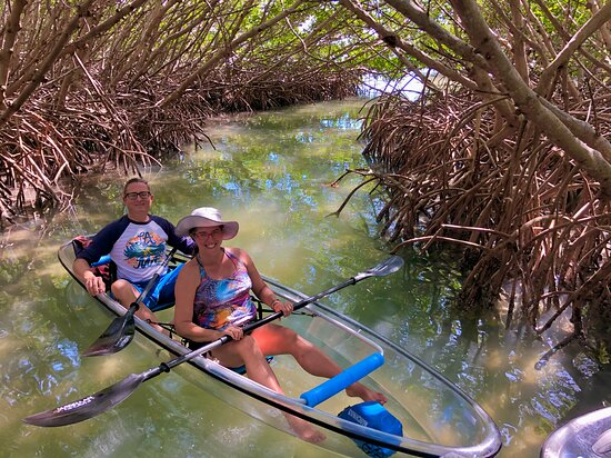 Clear Kayak Tour of Shell Key Preserve and Tampa Bay Area: Catching a bit of shade in the heart of a red mangrove stand.