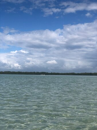 Clear Kayak Tour of Shell Key Preserve and Tampa Bay Area: Perfection on the water!