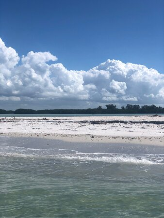 Clear Kayak Tour of Shell Key Preserve and Tampa Bay Area: Picture-perfect tour!