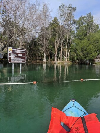 Ảnh về Guided Eco-Tour - Kayak or Paddleboard - Swim with Manatees