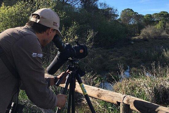 Circuit de 5 jours à la recherche d'oiseaux ibériques au départ de...