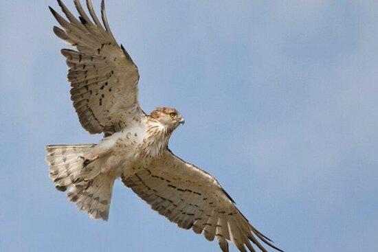 8-Day Private Tour Birds of Alentejo...