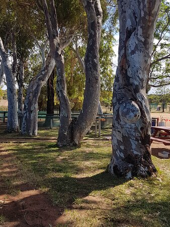 Beautiful large shady picnic areas for you to enjoy your picnic while the little ones enjoy some activities.