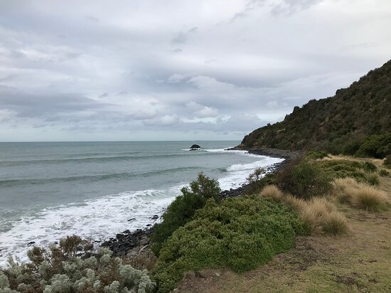 Godfrey's Beach Penguin Viewing