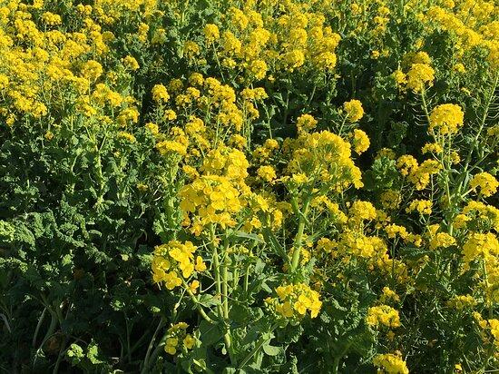 記念撮影スポット畑の花は盛り