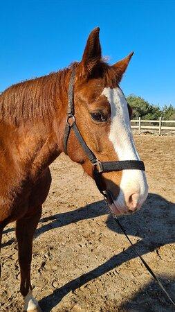 Saddle Club Zadar Horseback Riding Centre
