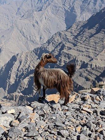 Samar Trail Hiking Adventure in Mount Jais: Goats ofcourse