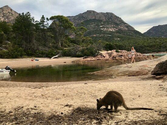 Honeymoon Bay, Freycinet.