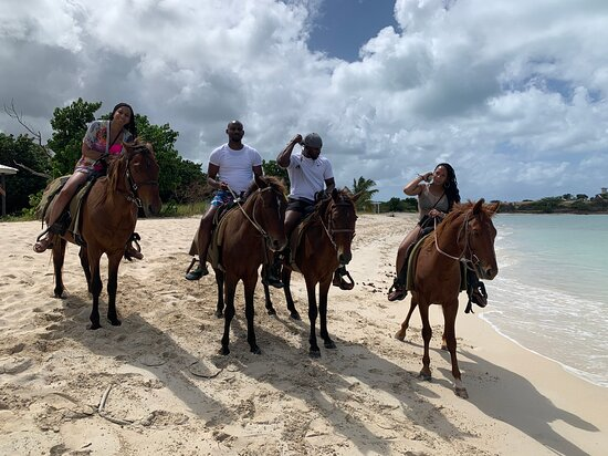 Yellow Trails Horseback Riding Antigua