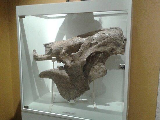 Museo de Ciencias Naturales de Miramar