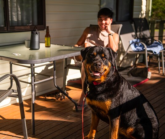 Pet-friendly cabins available