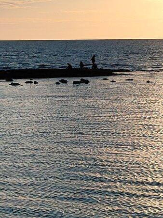 Half Moon Bay, Melbourne Bayside Gem