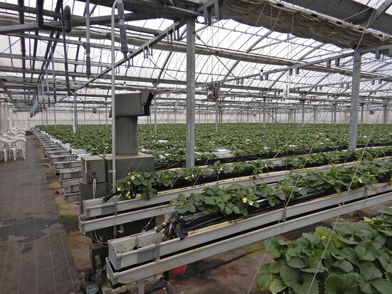 Fruit Farm Karatto