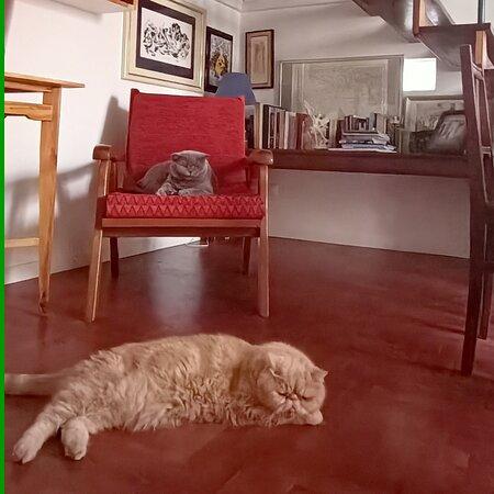 I miei due gatti: sono molto discreti e non entrano nelle camere, ma gli allergici sono avvisati!