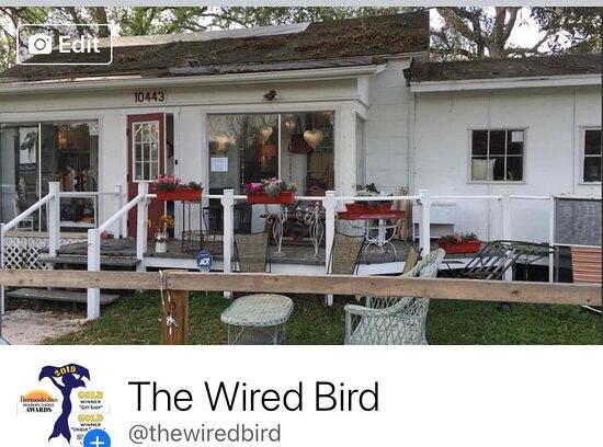 The Wired Bird