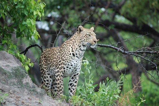 Bilder fra Sky Adventure Tours & Safaris – Bilder fra Maun - Tripadvisor