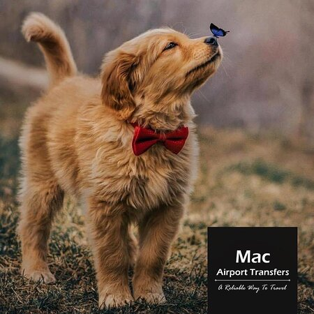 """""""Outside of a dog, a book is a man's best friend. ...   Airport Taxi by Mac™ Mac Airport Transfers® Mac Taxi by The Centaurus™ Rawalpindi & Islamabad.  Offering ⏰24-7 Airport Pick & Drop Services in twin cities.   We cover Bahria Town and DHA (all phases).   For enquiries & bookings.   📲Business Mob: +92 334 5900 777  Various ways to book your ride with us:  ✅WhatsApp  ♈Viber  🈯WeChat   ☑Facebook ☑Twitter ☑Instagram ☑LinkedIn   📧Email: macairporttransfers@gmail.com  #islamabad"""