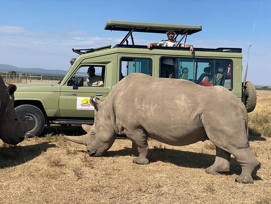 Our guests enjoying an up close encounter with Najin and Fatu, the only two surviving northern White Rhinos in the world, at Ol Pejeta Conservancy in January 2021