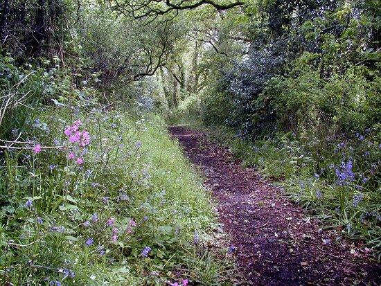 Drefach Velindre Walk