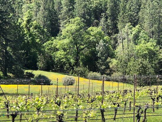 Vineyard and Forest View