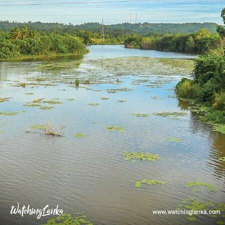 Matara, Σρι Λάνκα: Visit More -  https://www.watchinglanka.com/nilwala-river/