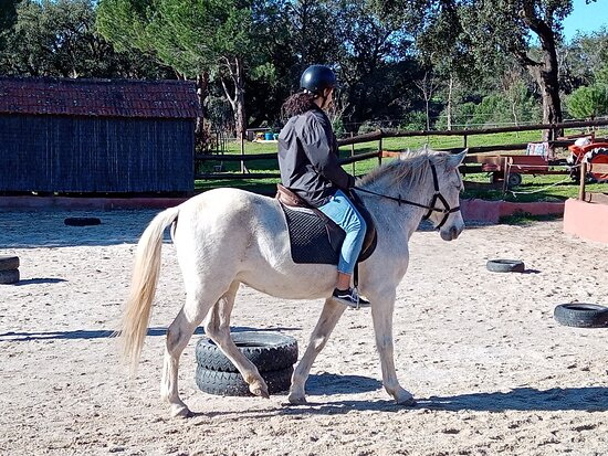 Midões, Portugal: Horse riding lessons in winter Portugal by Horse farm holidays