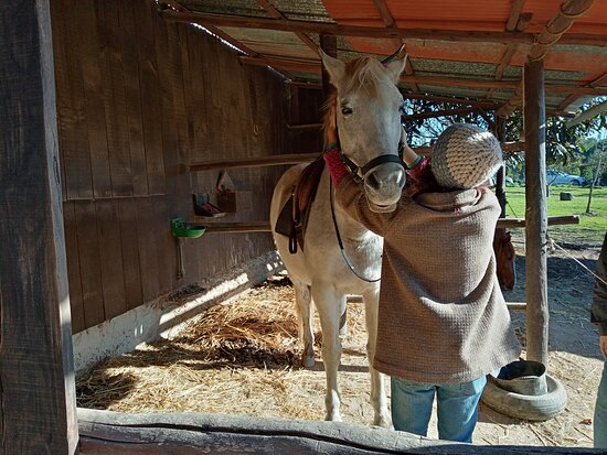 Midões, Portugal: Riding lessons Portugal by Horse farm holidays