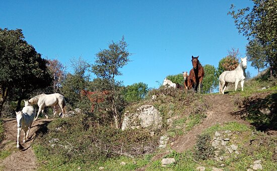 Midões, Portugal: Portugal by Horse-riding holiday's - farm holidays
