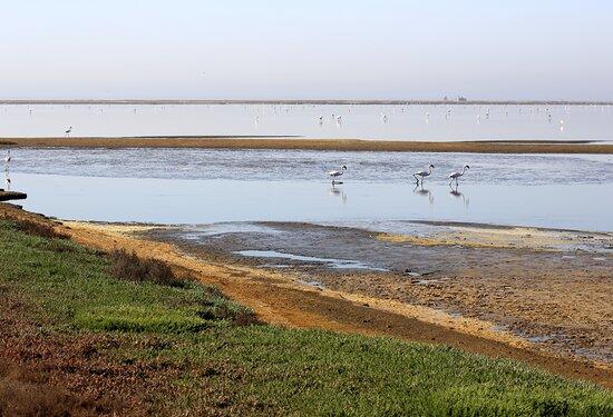 Walvis Bay, Namibia: Salt pans