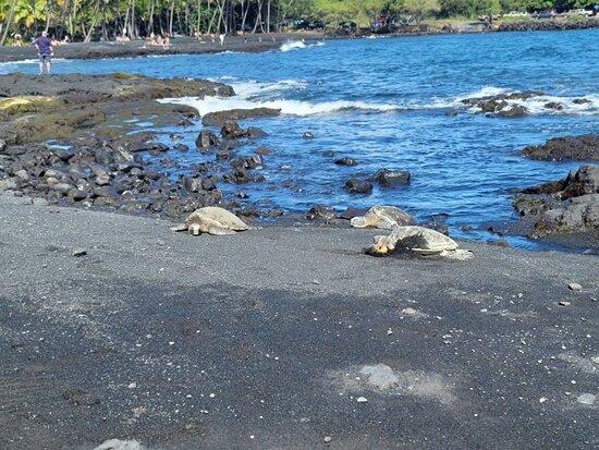 Small Group Big Island Twilight Volcano and Stargazing Tour Photo