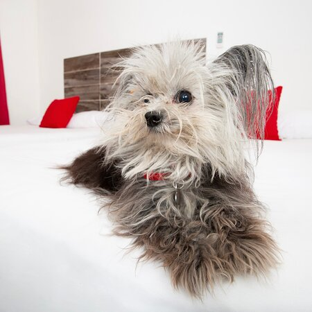 Pet friendly- Se aceptan  mascotas con costo adicional